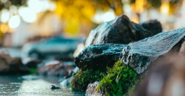 close up photography of green moss on rock