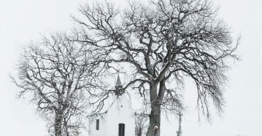 bare tree near building during snow time photo
